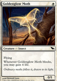 Goldenglow Moth